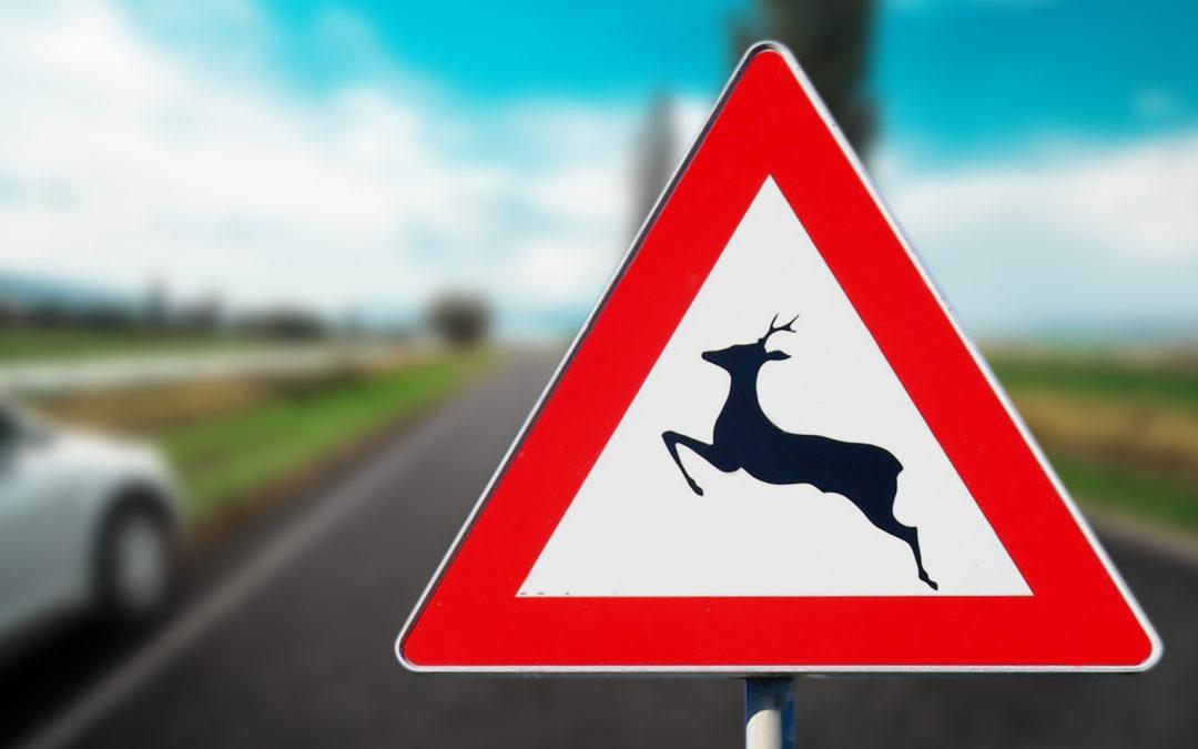 Sinistri stradali e fauna selvatica: chi paga?